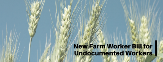 Proposed Bill to Legalize Undocumented Farm Workers